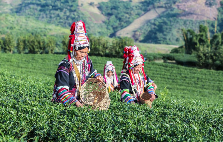 Akha Women from Thailand